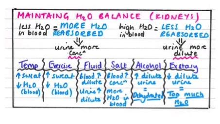 Biology IGCSE revision