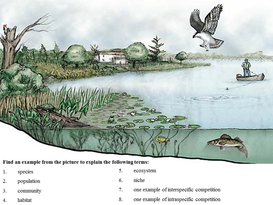 Understanding key terms in ecology