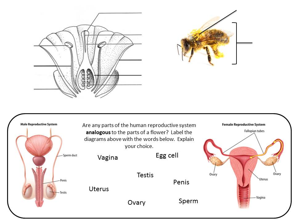 Sexual reproduction in plants and animals