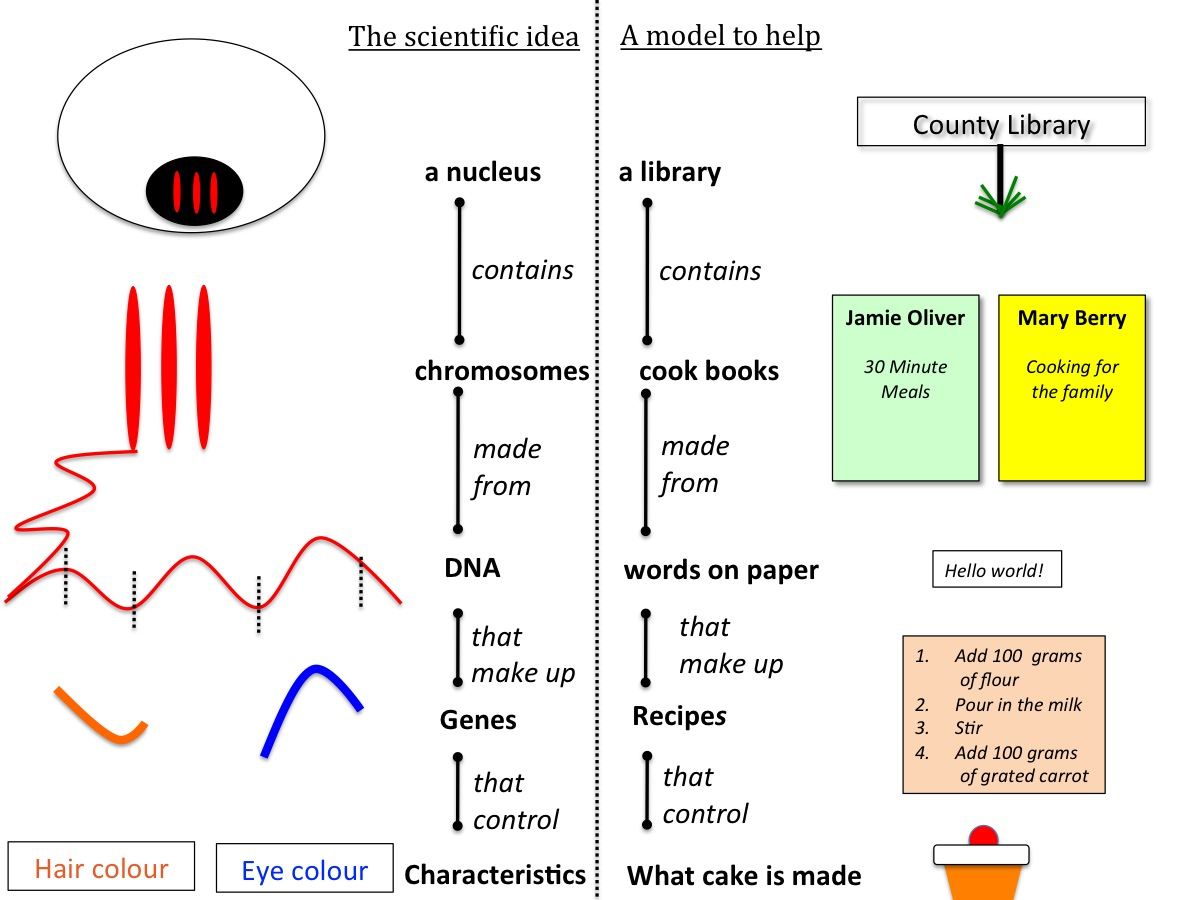 Genes and inheritance teaching resources - the science teacher
