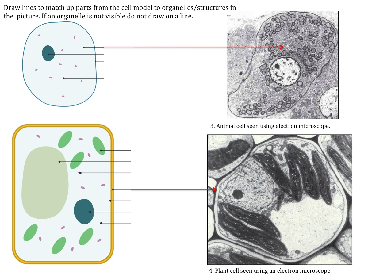 Cell Structure Teaching Resources The Science Teacher Diagram Labeled Similarities Between Prokaryotic And Eukaryotic Light Electron Microscope Resolution Magnification Gcse Worksheet Labelling Cells